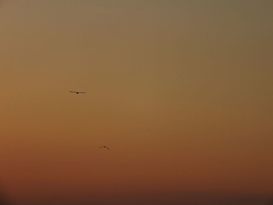 #birds #Nature  #sky #sunset #sun #clouds #skylovers #sky #nature #beautifulinnature #naturalbeauty #photography #landscape #two_birds