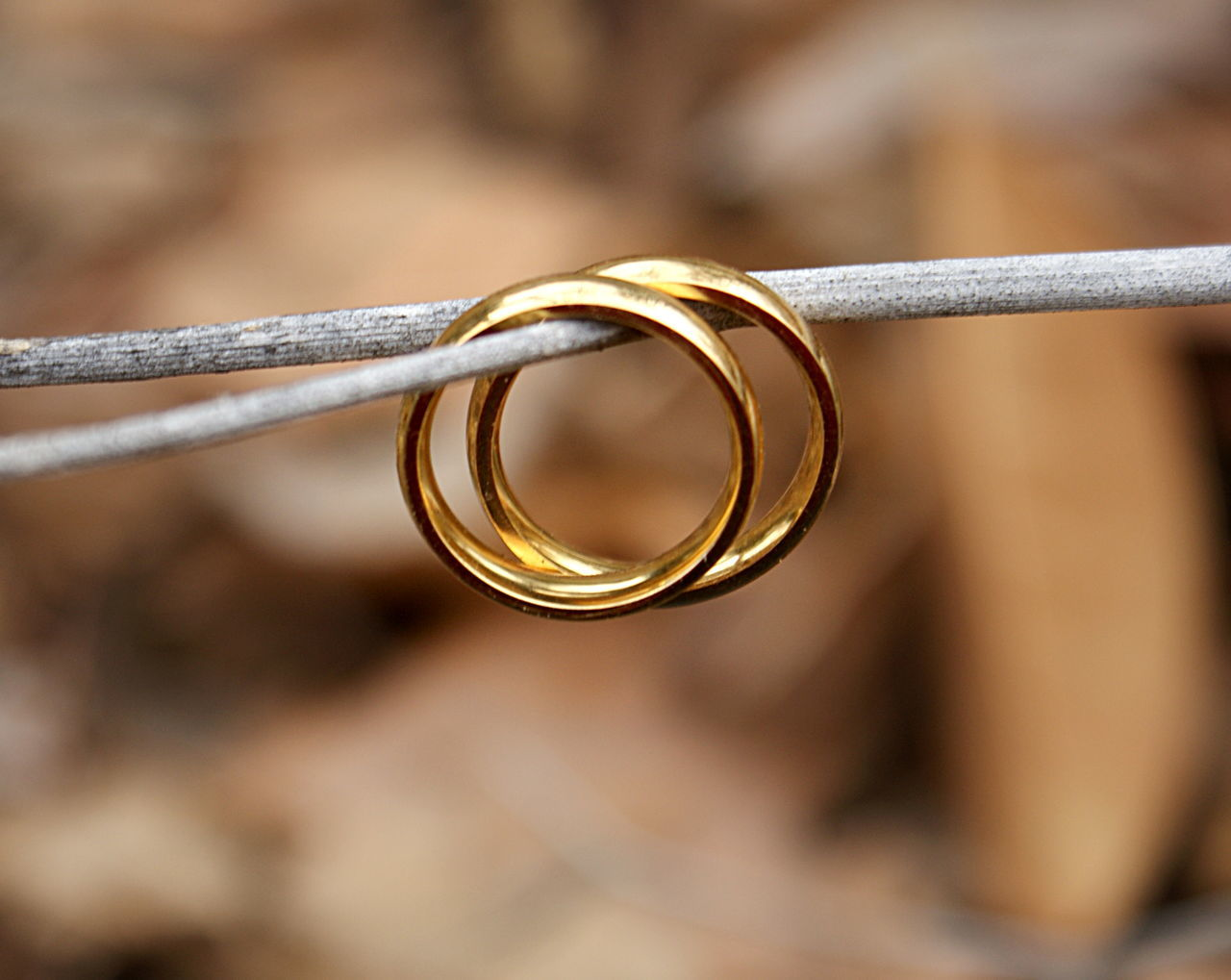 Golden wedding bands hang on a tree twig against a blurred background of fallen leaves. Blurred Background Brown Close-up Day Focus On Foreground Gold Gold Colored Golden Rings Leaves Life Events Love Marriage  Nature Neutral Colors No People Outdoors Ring Twigs And Branches Wedding Ring