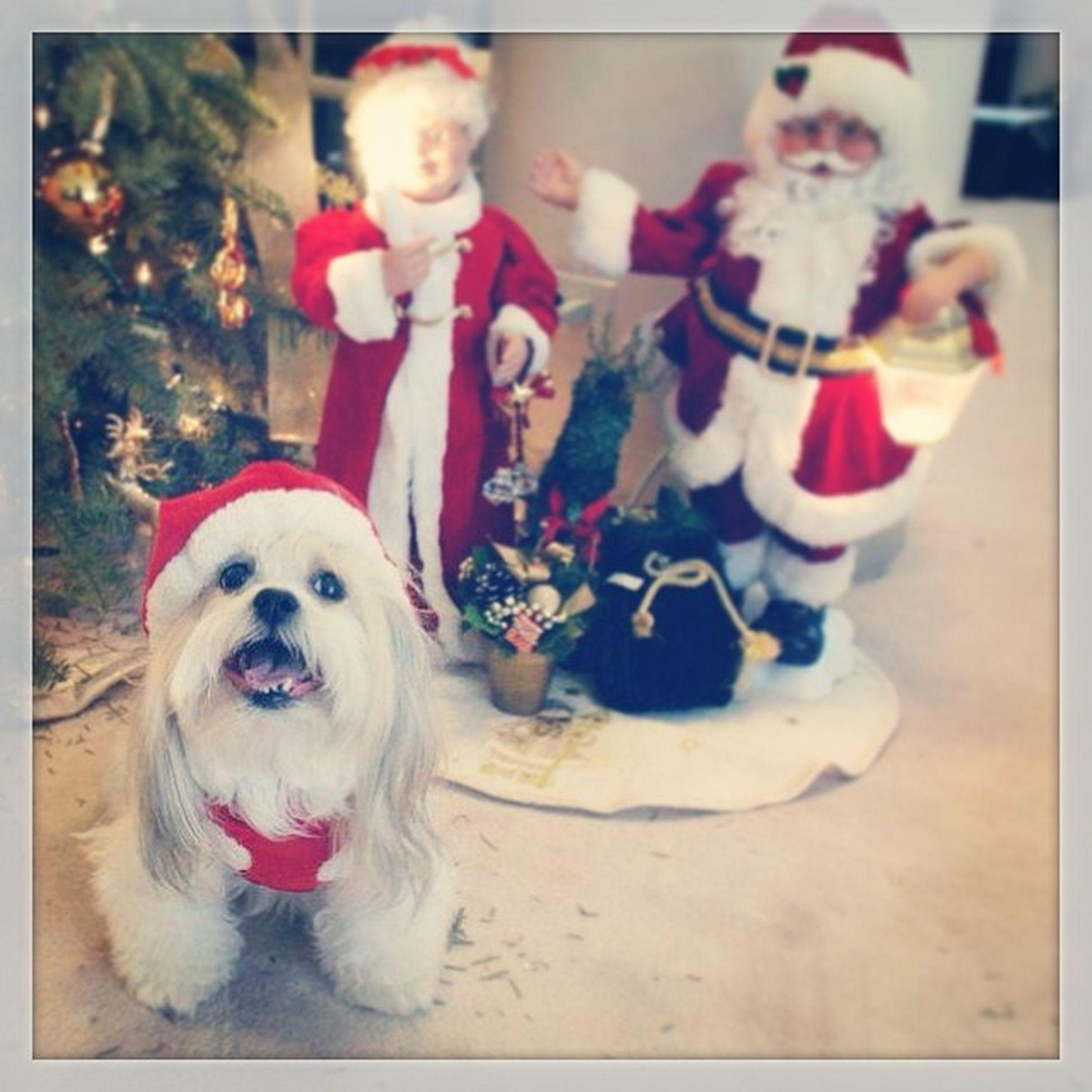 TBT  to last Christmas. I'll see you soon baby ??? Ninemoredays Babydog Candy christmas almosthome