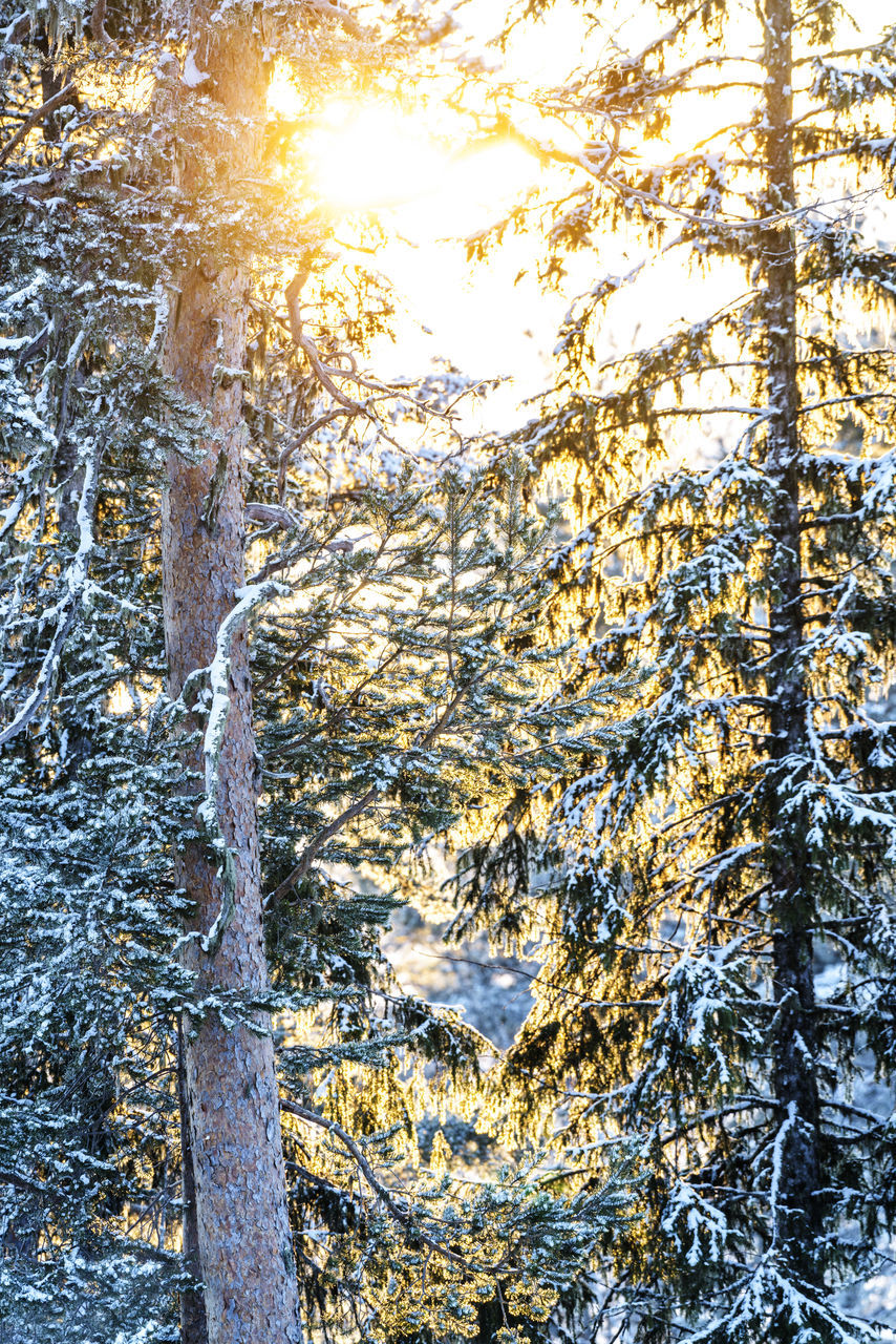 tree, tree trunk, nature, day, growth, forest, no people, sunlight, outdoors, beauty in nature, tranquility, tranquil scene, scenics, branch, winter, snow, close-up