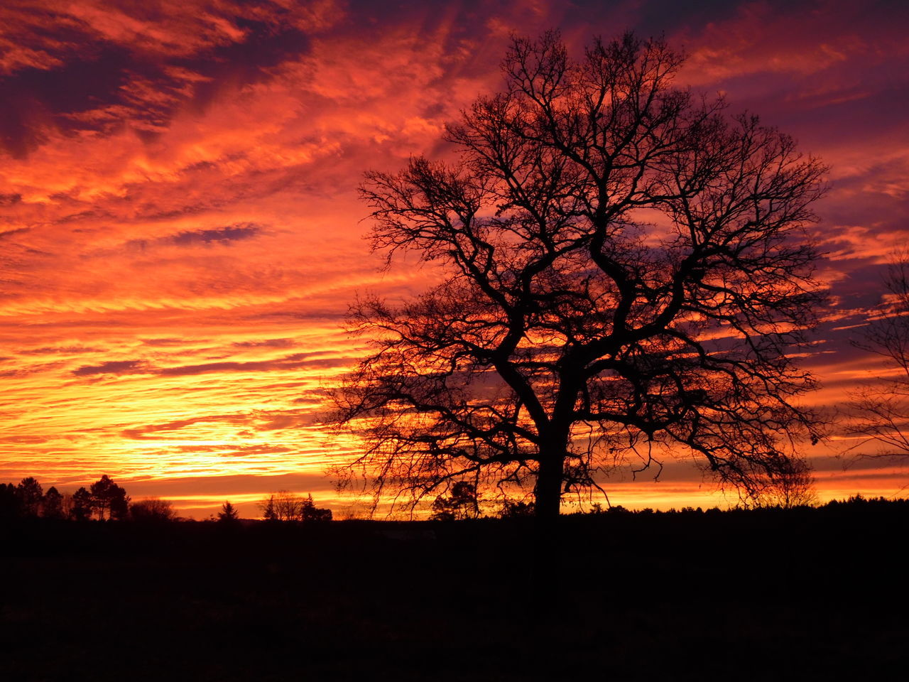 Silhouette Of Bare Tree On Landscape