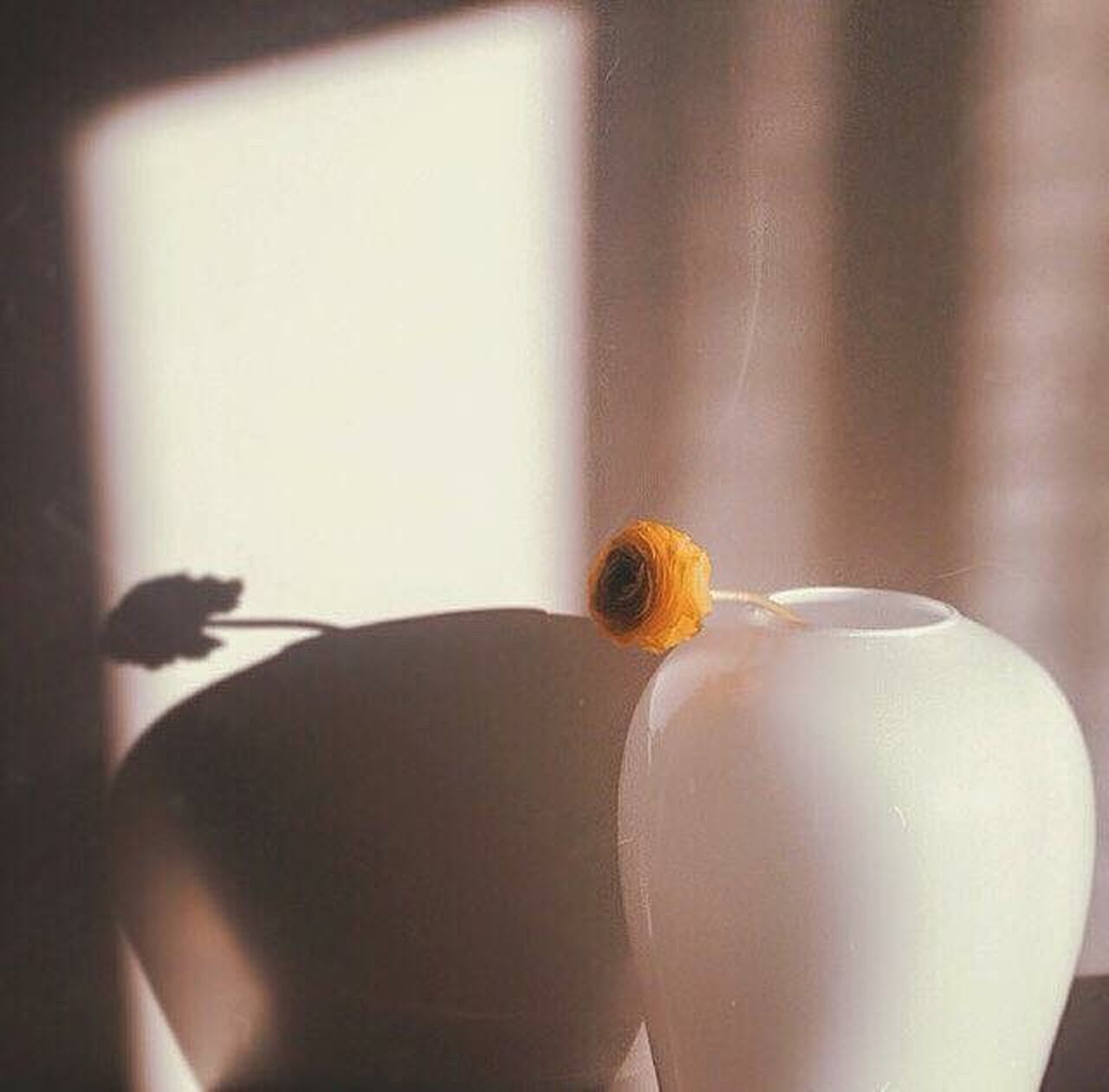 indoors, shadow, animal themes, one animal, no people, drink, animals in the wild, day, food, close-up, freshness, nature, bird