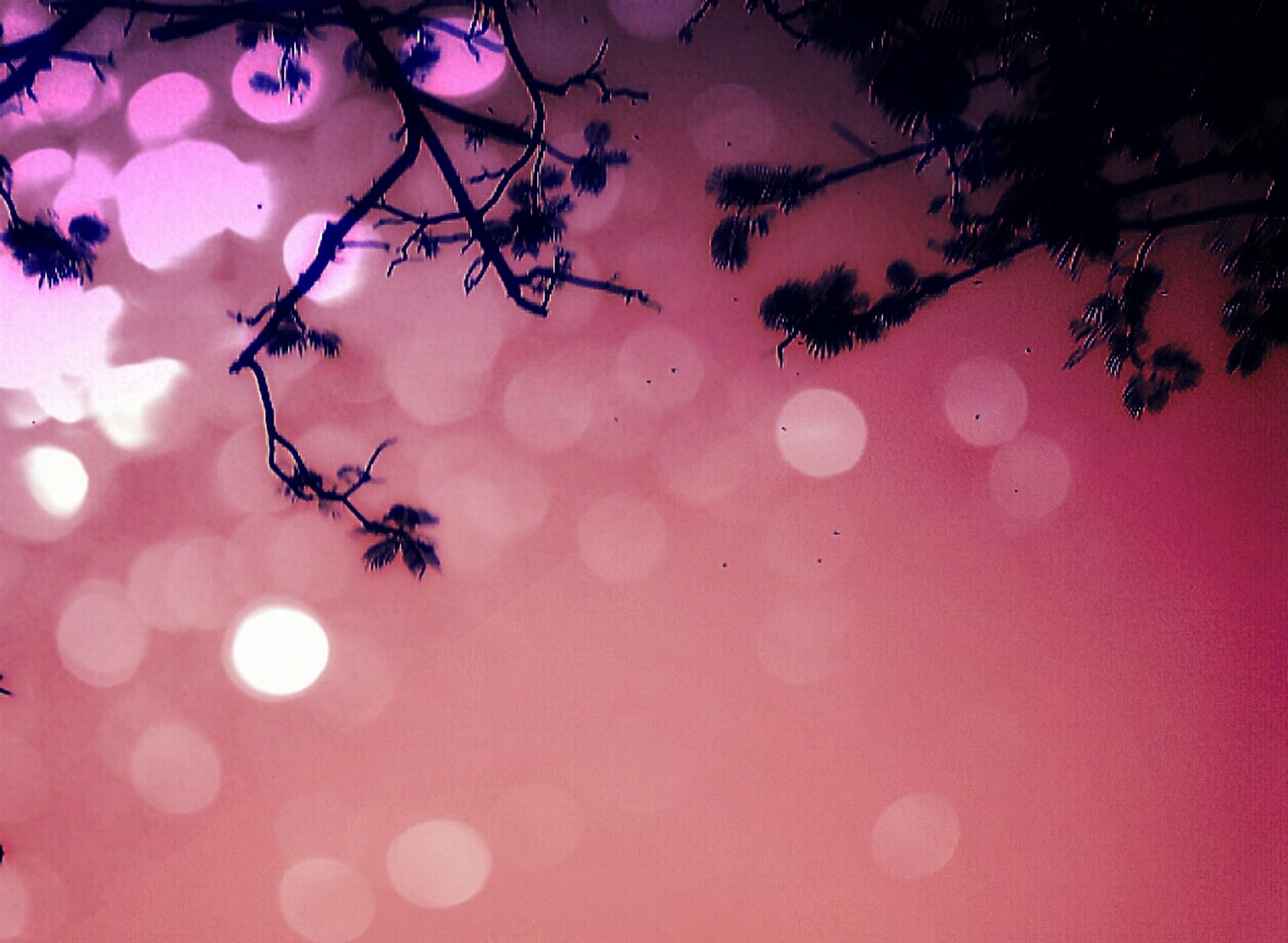 low angle view, illuminated, lighting equipment, pink color, decoration, hanging, tree, branch, red, celebration, sky, no people, christmas, night, nature, outdoors, christmas tree, multi colored, christmas decoration, christmas lights