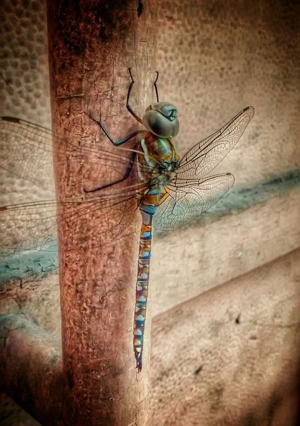 Urban dragonfly Animals Urban Landscape Insects  Street Photography