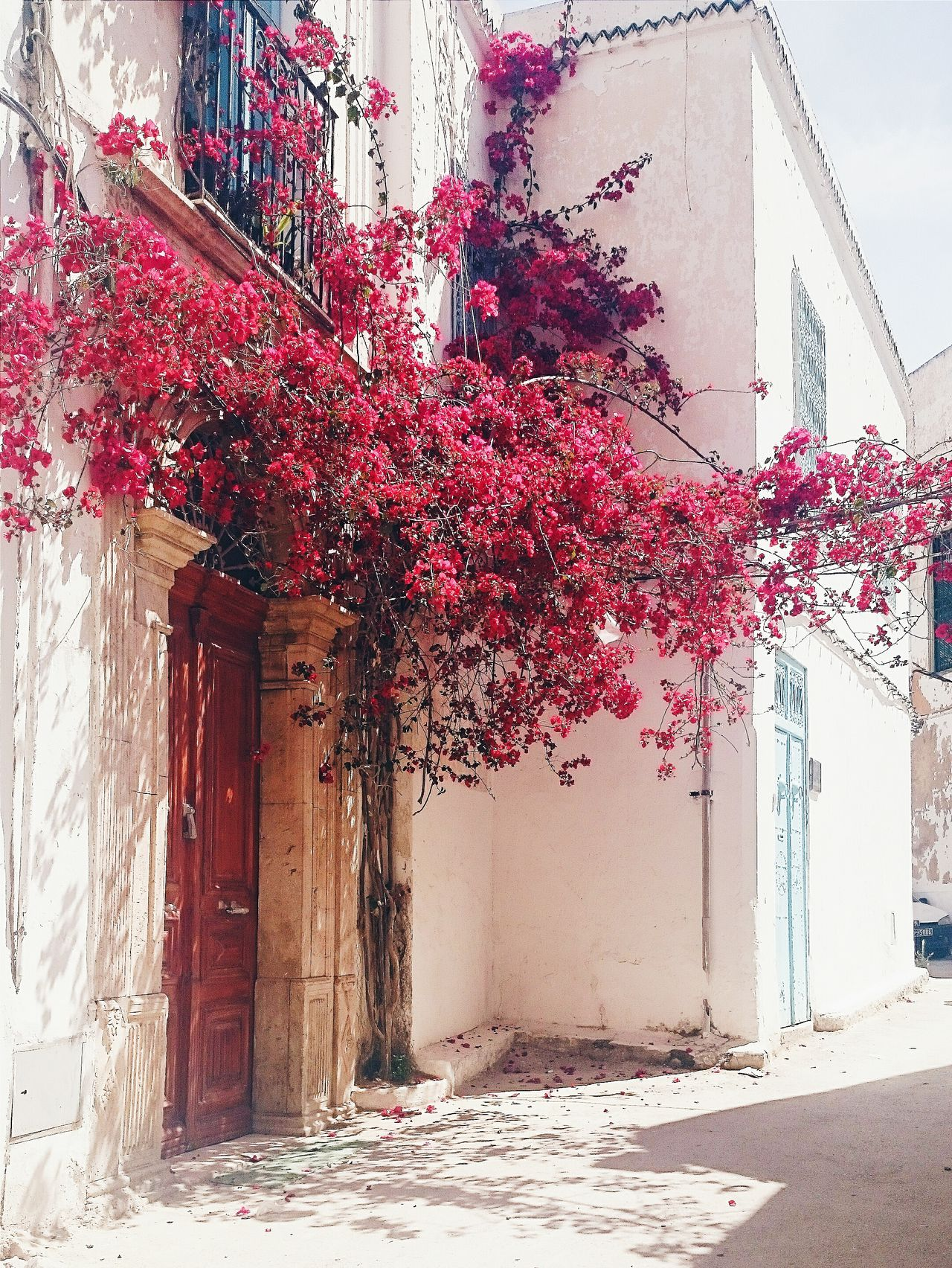 تونس عشقة ما توفاش... Eyeemtunisia EyeemMedina Hanging Out Lights Flowers Red Taking Photos Best Of EyeEm