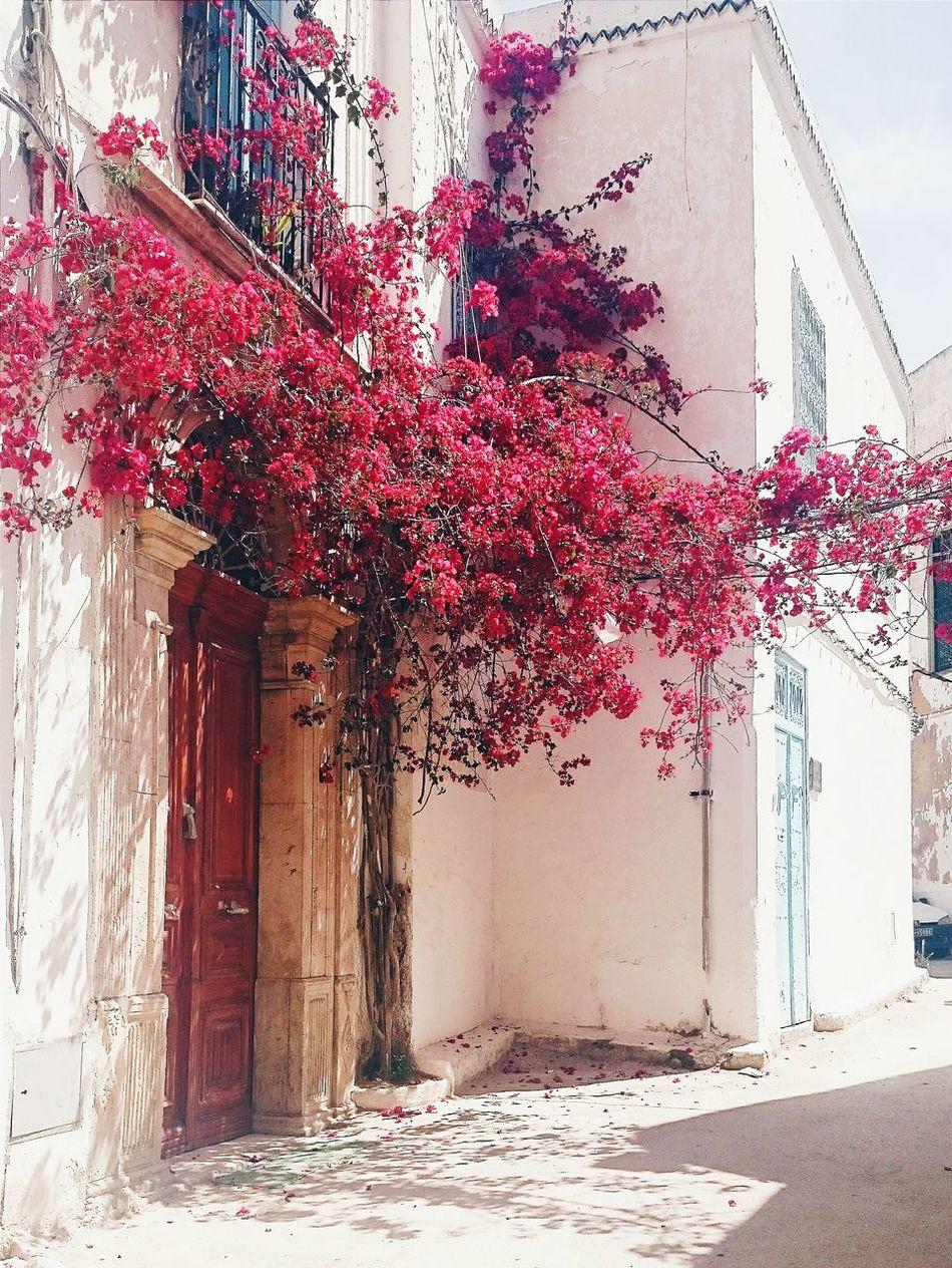 تونس عشقة ما توفاش... Eyeemtunisia EyeemMedina Hanging Out Lights Flowers Red Taking Photos Best Of EyeEm