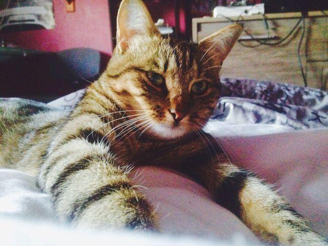 Cat Miaou Mylove ❤️