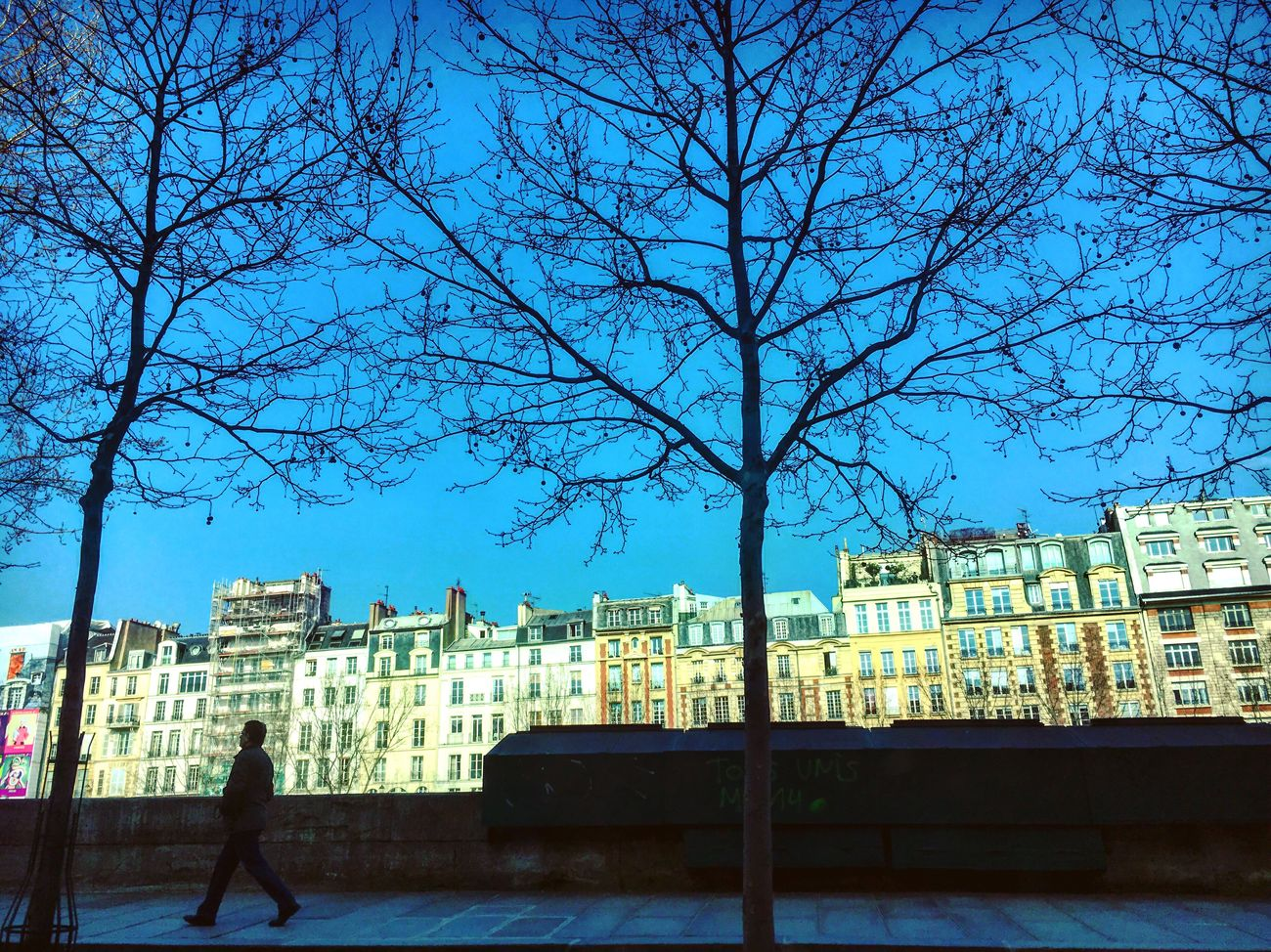 Quays Streetphotography Paris Quay Sunny Day Blue Sky Buildings Light And Shadow Trees Walker City View  Cityscape Sunshine Mmaff From My Point Of View Eye4photography  EyeEm Gallery