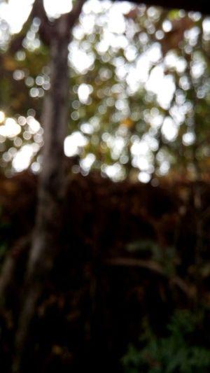 No Edits Blur Polka Dots ♥ Tree Photo For Fun ı Love It ❤