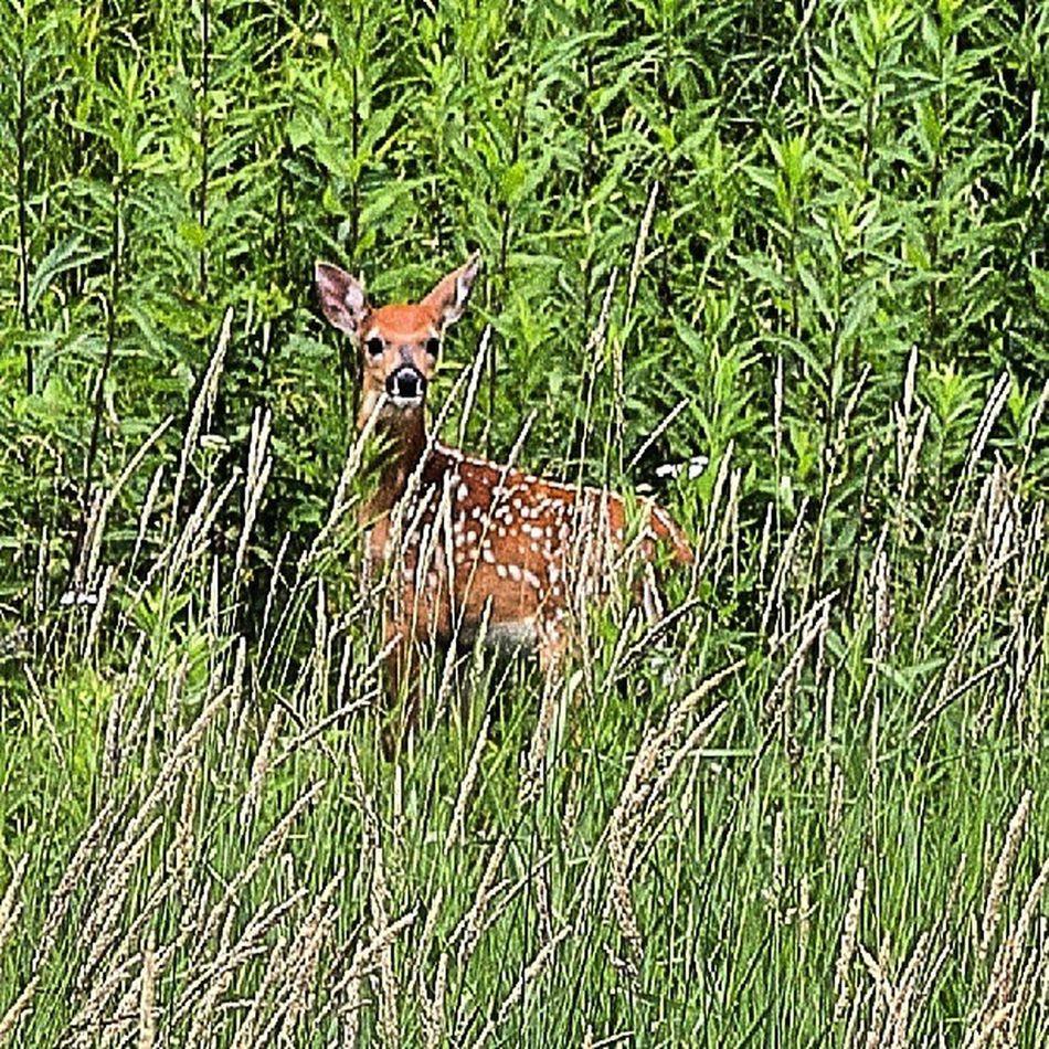 Animazing_wildlife Awild_capture Bd Fabfaunas instanaturefriends landscape_captures marvelshots nature_perfection phenominal_shots underdogs_nature wildlife_perfection worldcaptures