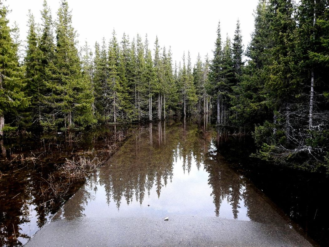 Russia Nature Naryan-mar Water Tree Forest Amazing View Water_collection Moment