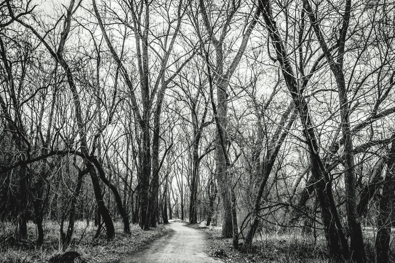 Tree Nature Growth Outdoors No People Day Beauty In Nature Sky Landscape Blackandwhite Photography Tranquility BestofEyeEm