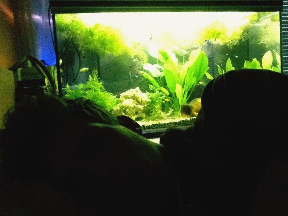 Killerfish