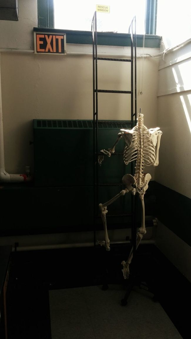 Hanging Out Taking Photos Check This Out Bones Skeleton Art Skeleton Education Skeletons Taking Photos Hello World Exit Exiting School Life  Check This Out Shots I Love