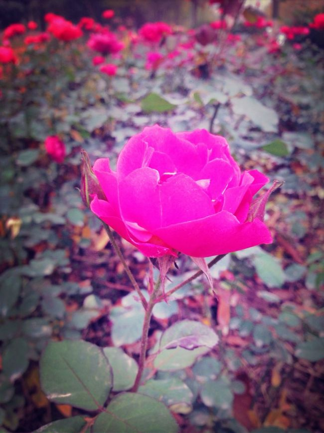 beautiful flower in winter (null) First Eyeem Photo