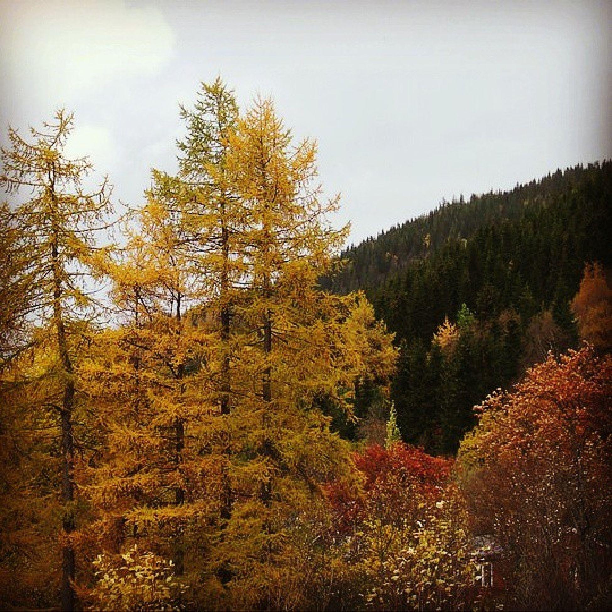 Autumn H øst Ilovenorway Ilovenorway_nordland mosjøen norge norway nordland