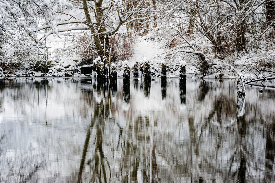 Bare Tree Beauty In Nature Birch Tree Branch Cold Cold Temperature Day Extreme Weather Frozen Ice Nature No People Outdoors Reflections In The Water Scenics Snow Tranquil Scene Tranquility Tree Water Winter