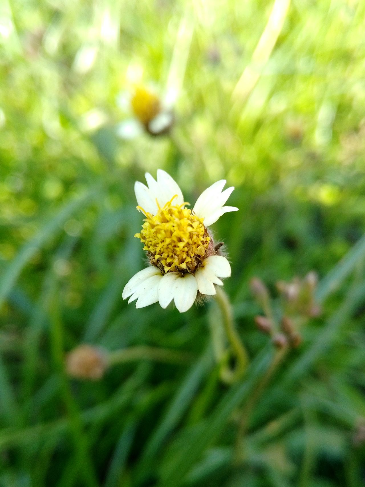 Flower Nature Beauty In Nature Growth Fragility Plant Freshness Close-up Outdoors No People Flower Head Day Grass Green Color Nature
