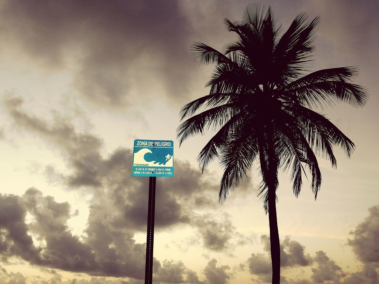 Beautiful stock photos of puerto rico, Beauty In Nature, Cloud - Sky, Coconut Palm Tree, Growth