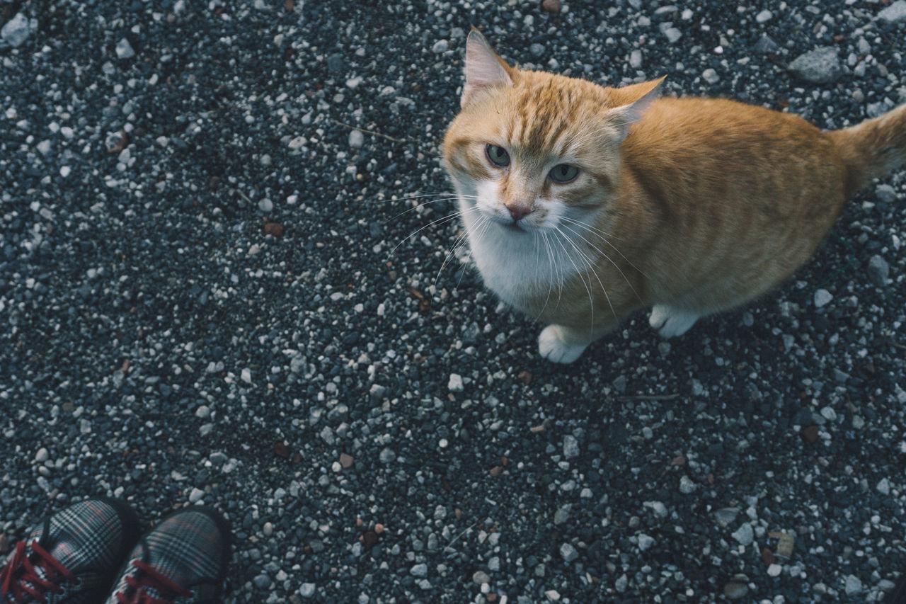 One Animal Feline Outdoors Sunset Cat Orange