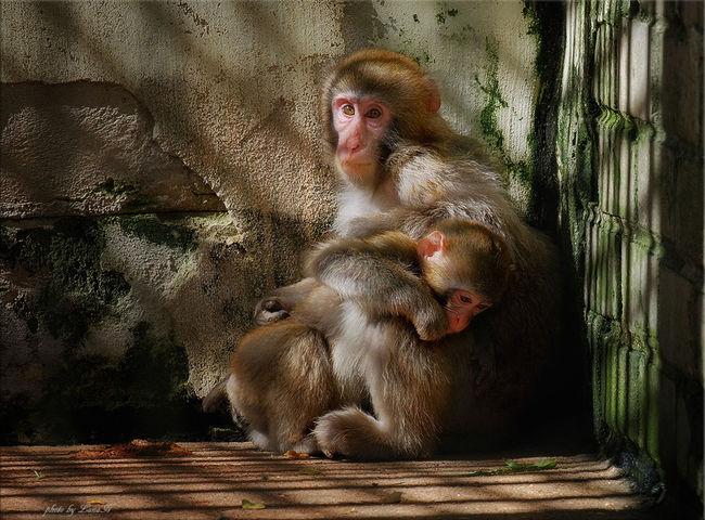 Manky Zoo Animals  Zoo