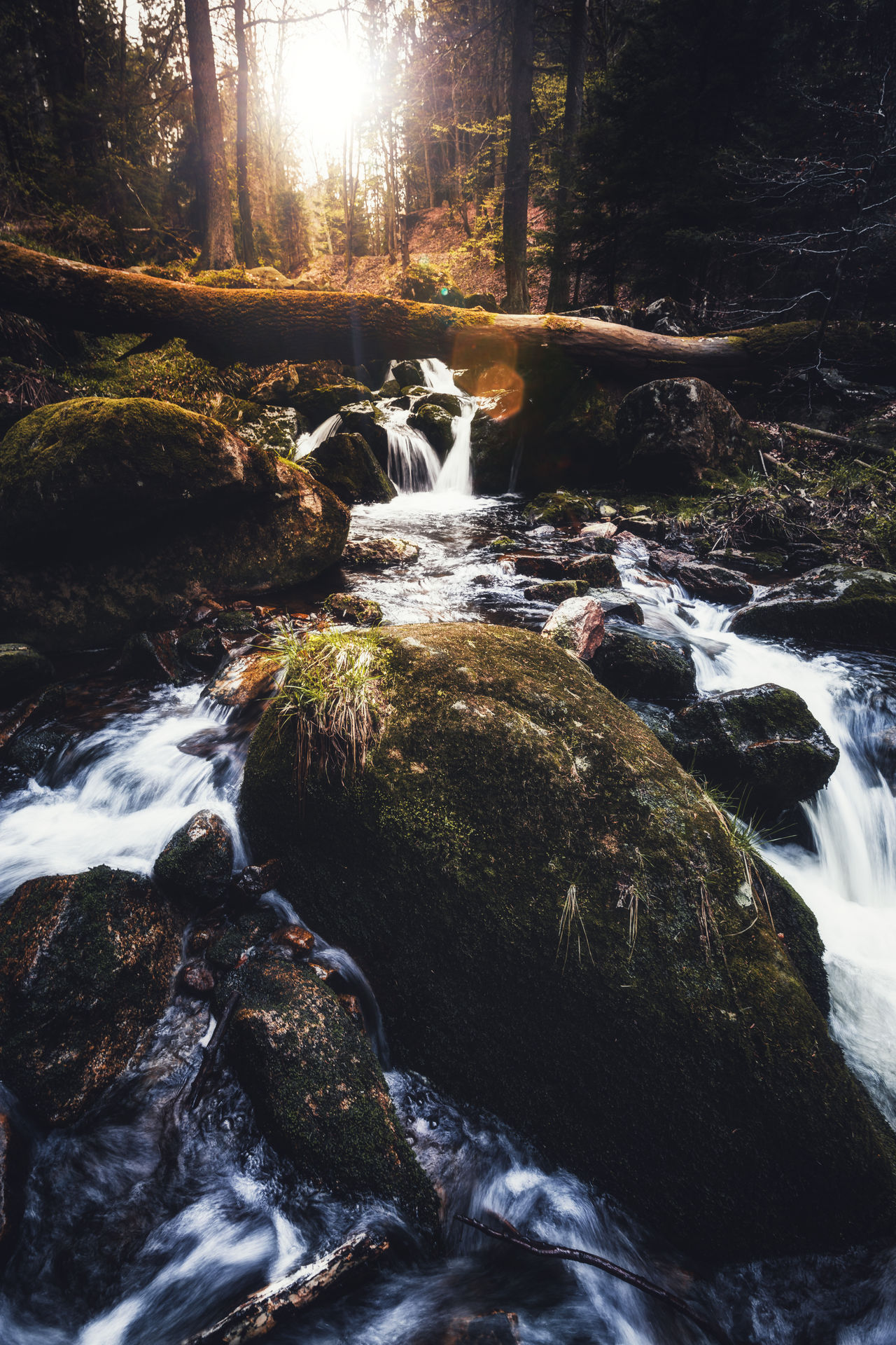 Ilsefälle Beauty In Nature Day Exploring New Ground EyeEmNewHere Eyemphotography Flowing Water Forest Harz Ilsefälle Ilsenburg Ilsetal Long Exposure Motion Nature No People Outdoors Rock - Object Scenics Stream Tranquil Scene Tranquility Tree Water Waterfall