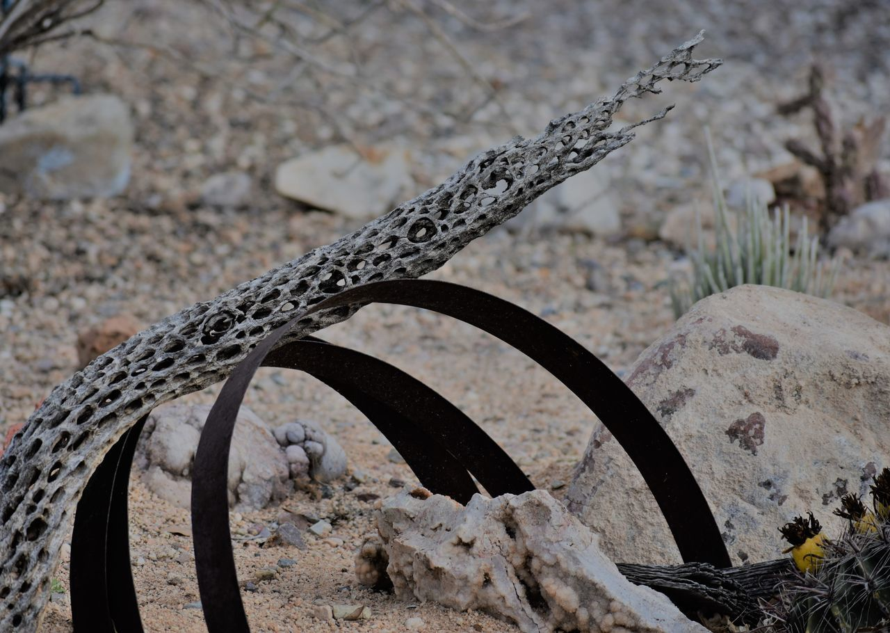 Cactus Branc Close-up Dead Cactus Bran Dead Cactus Branch Metal No People Outdoors Water