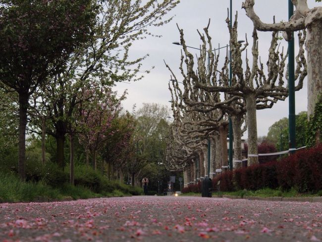 Different but the Same. NevermindRecords Diferent Same  Mirror Avenue Road Park Turin Italy Simmetry Nature Tree