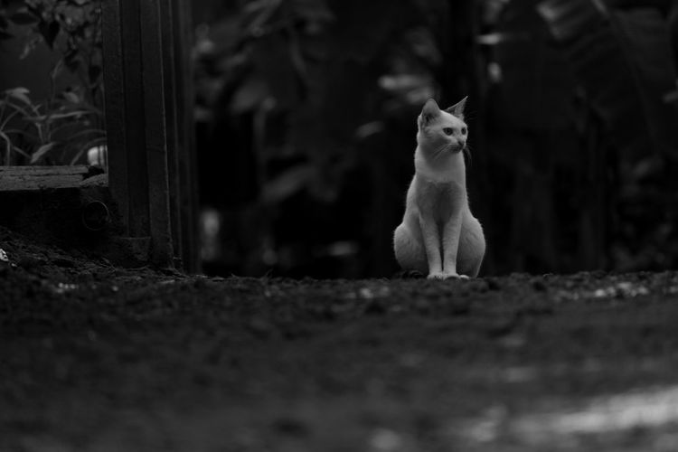 Resting Time.. MonochromePhotography One Animal Animal Themes Selective Focus Domestic Animals Standing Mammal Surface Level Zoology Pets Day Outdoors Loyalty No People Animal Herbiv