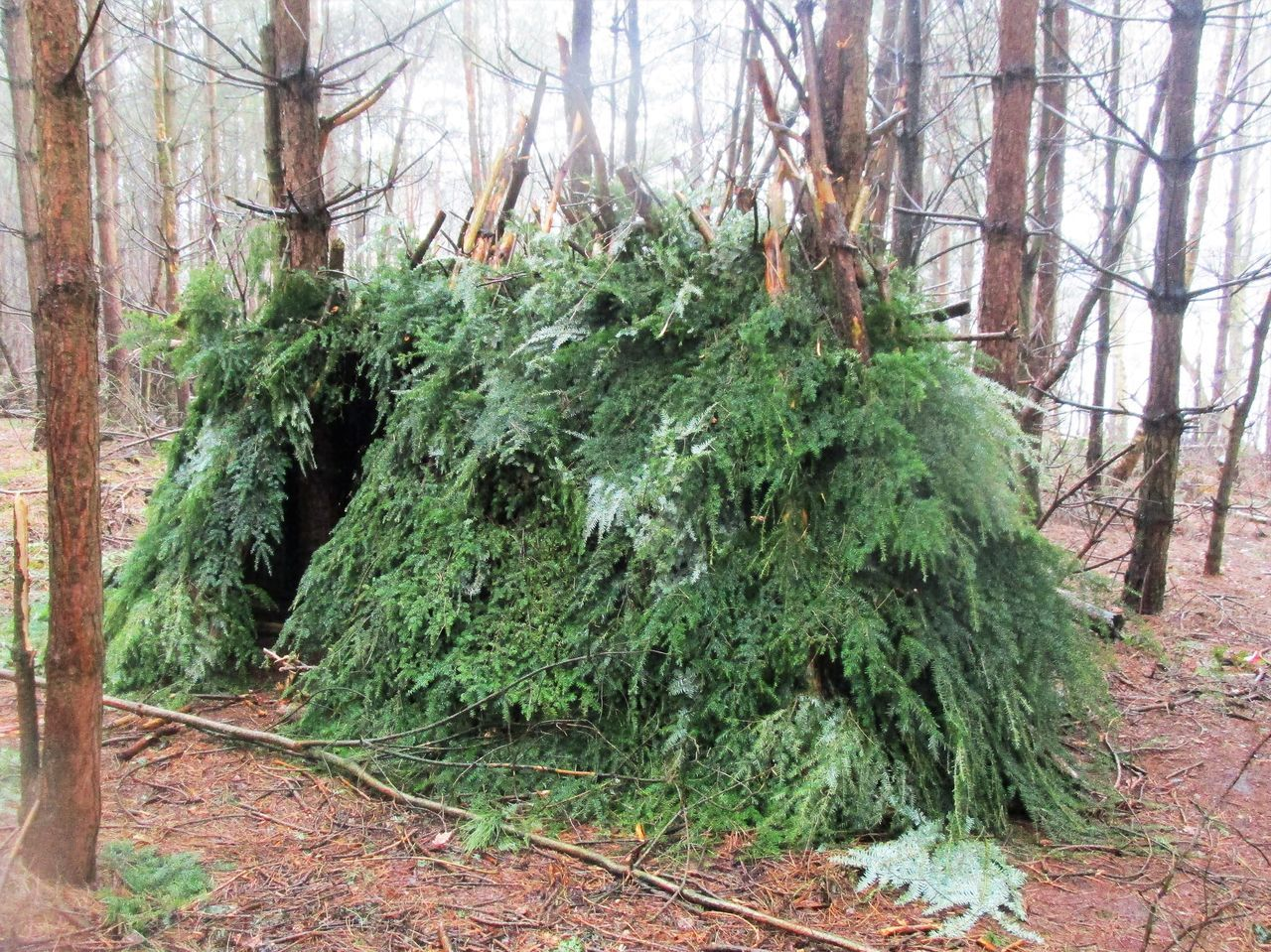 Bivouac Day Forest Green Color Man Made Structure Nature No People Outdoors Shelter WoodLand