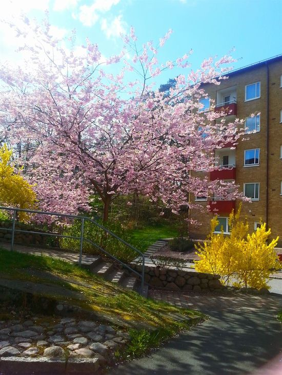 Secret Garden Tree And Bushes Yellow And Pink Flowers The Neighbourhood