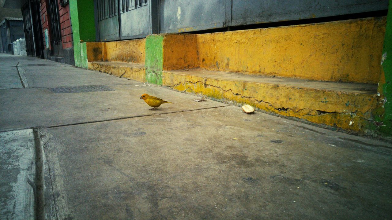 animal themes, one animal, architecture, bird, built structure, building exterior, animals in the wild, no people, yellow, day, outdoors, mammal
