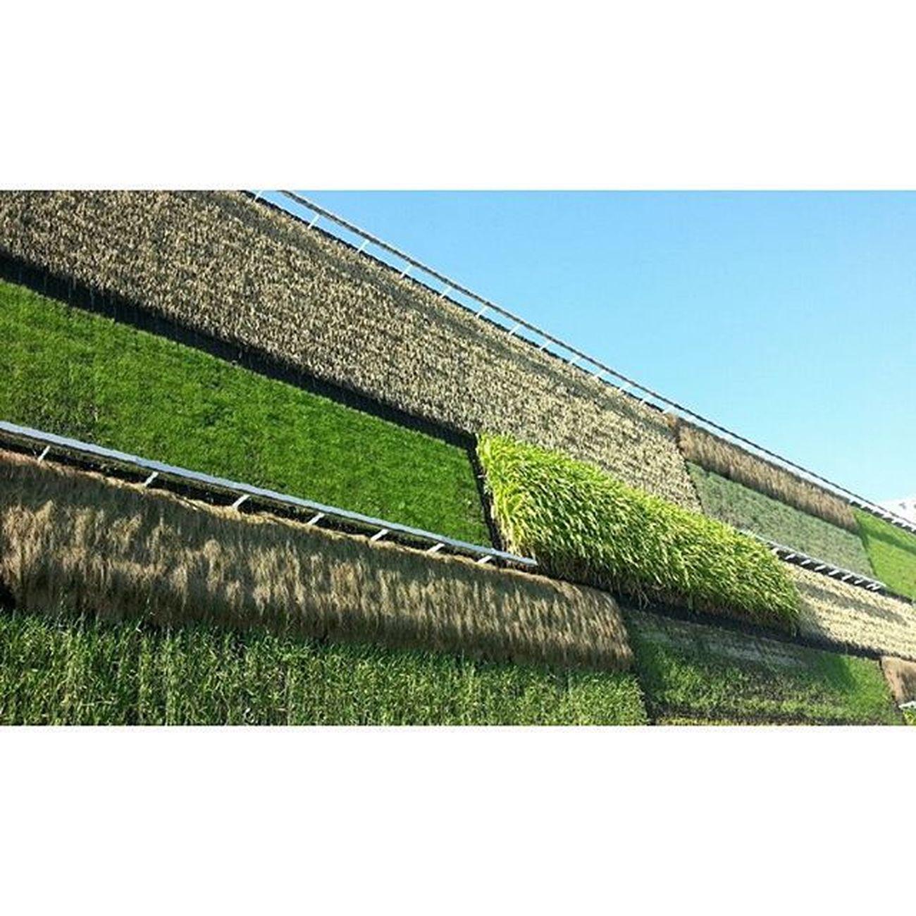 Padiglione Israele. Un tuffo tra il verde e l'azzurro Expo2015 Israele Milano @milano_go @theitalient Nofilter Greenfood Sky