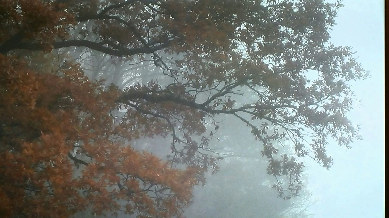 tree, nature, beauty in nature, tranquil scene, tranquility, day, scenics, fog, outdoors, no people, mist, branch, sky, landscape, winter, forest, growth, cold temperature, hazy, mountain, water