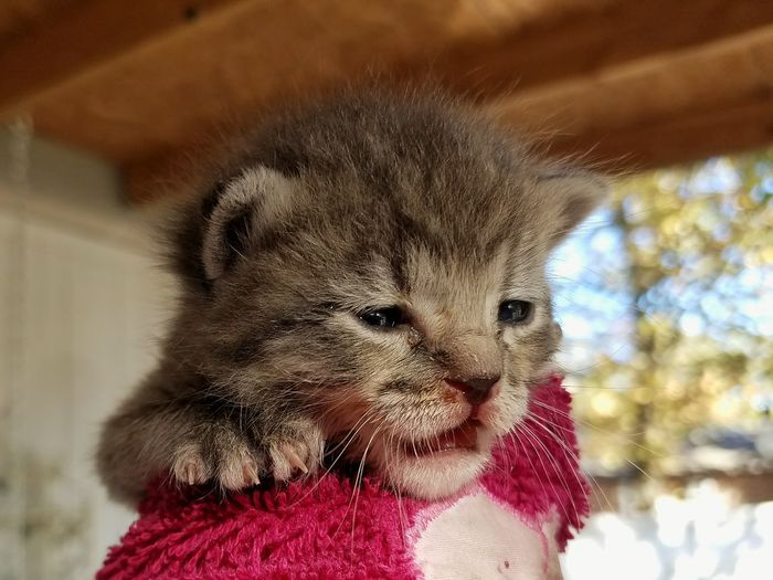Animal Themes One Animal Close-up No People Indoors  Mammal Day Baby kitten rescue