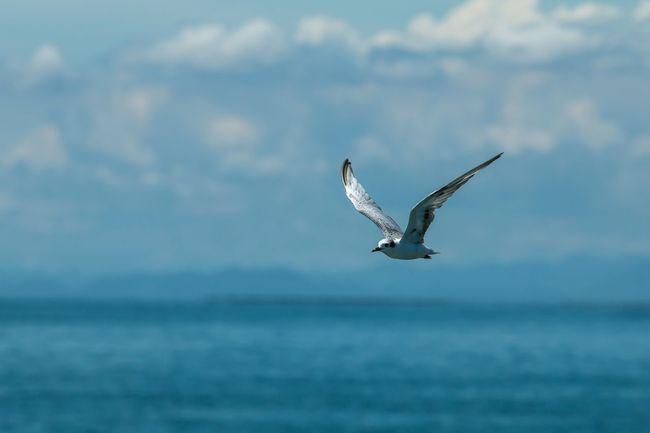 Bird Watching. Things I Like Bird Birdflying Birdflight Birdfly Fly Flying Flyingbird Sea And Sky Seaside Seascape Travel Bird Photography Travel Photography