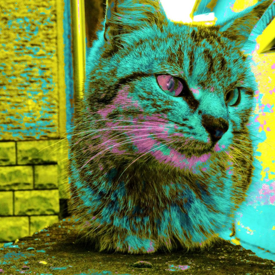Close-up Multi Colored One Animal Animal Themes EyeEmNewHere Colorfulcat Artsy Lovely Cat 😻 Domestic Animals No People Pets Day Outdoors