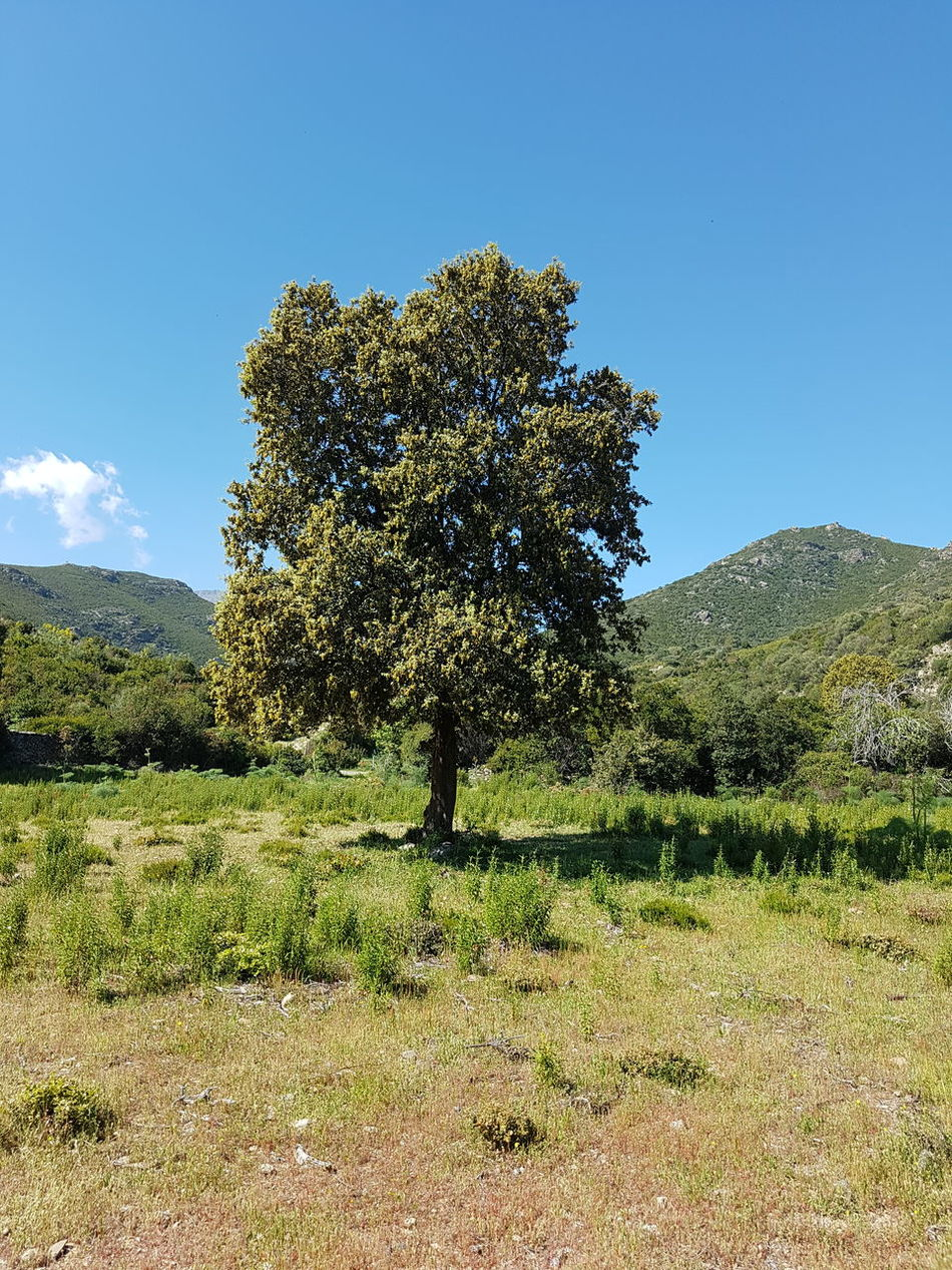 Nature Sky Day Outdoors Growth Tree Beauty In Nature Corsica Tranquility Tranquil Scene Landscape Cloud - Sky No People