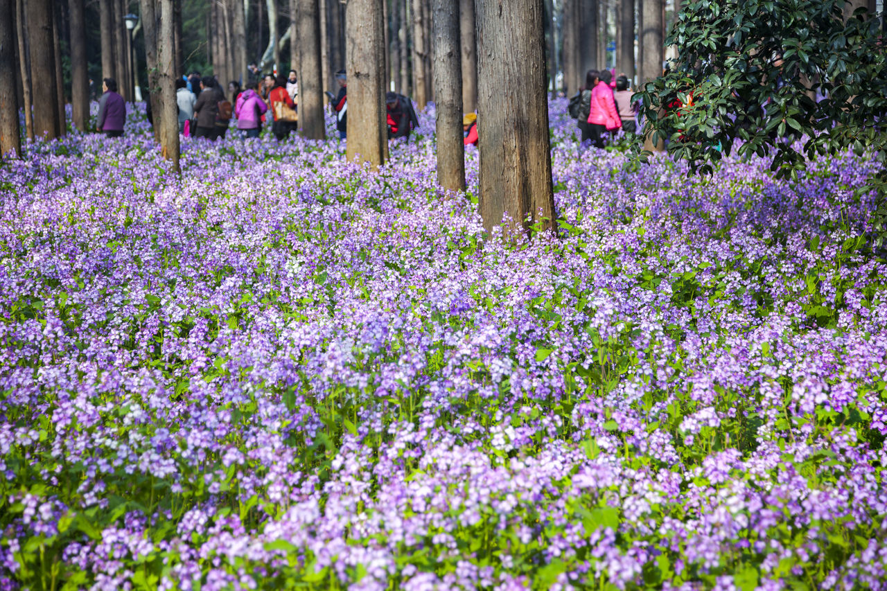 February Orchid Blossom Blue China February Orchid Flower Freshness Growth In Bloom Nature Outdoors Plant Purple Yew Beauty In Nature