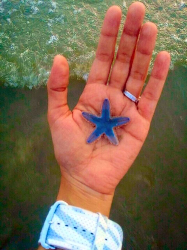 Leisure Activity Holding Starfish At Beach Beauty In Nature IPhoneography