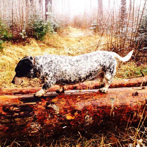 Lora. The best hound dog.