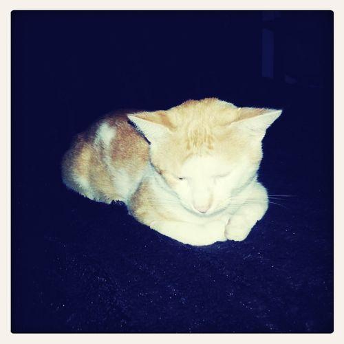 Cat Relaxing Model Hello World