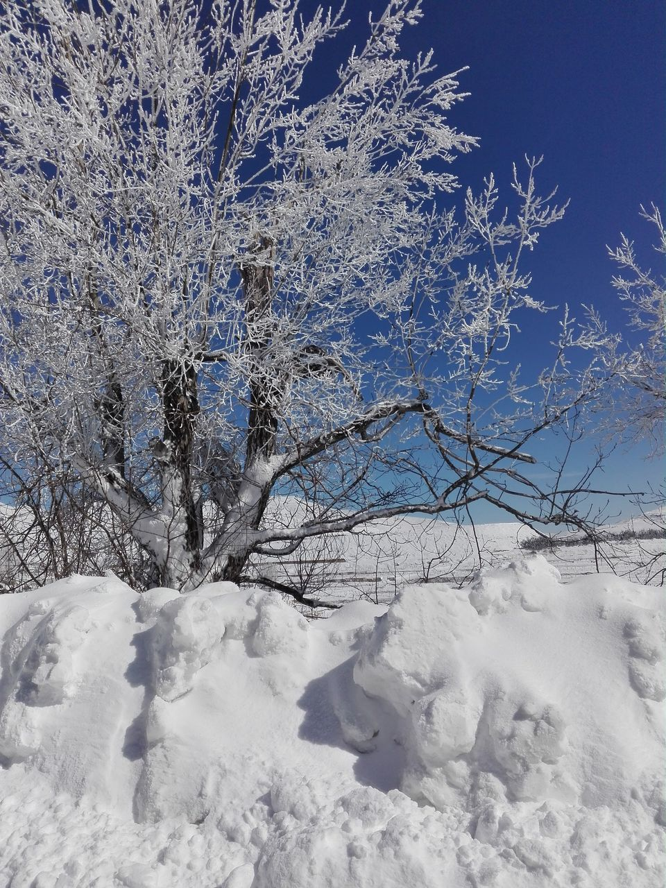winter, snow, cold temperature, white, nature, white color, tranquility, beauty in nature, tranquil scene, tree, no people, blue, outdoors, frozen, scenics, day, landscape, bare tree, branch, sky