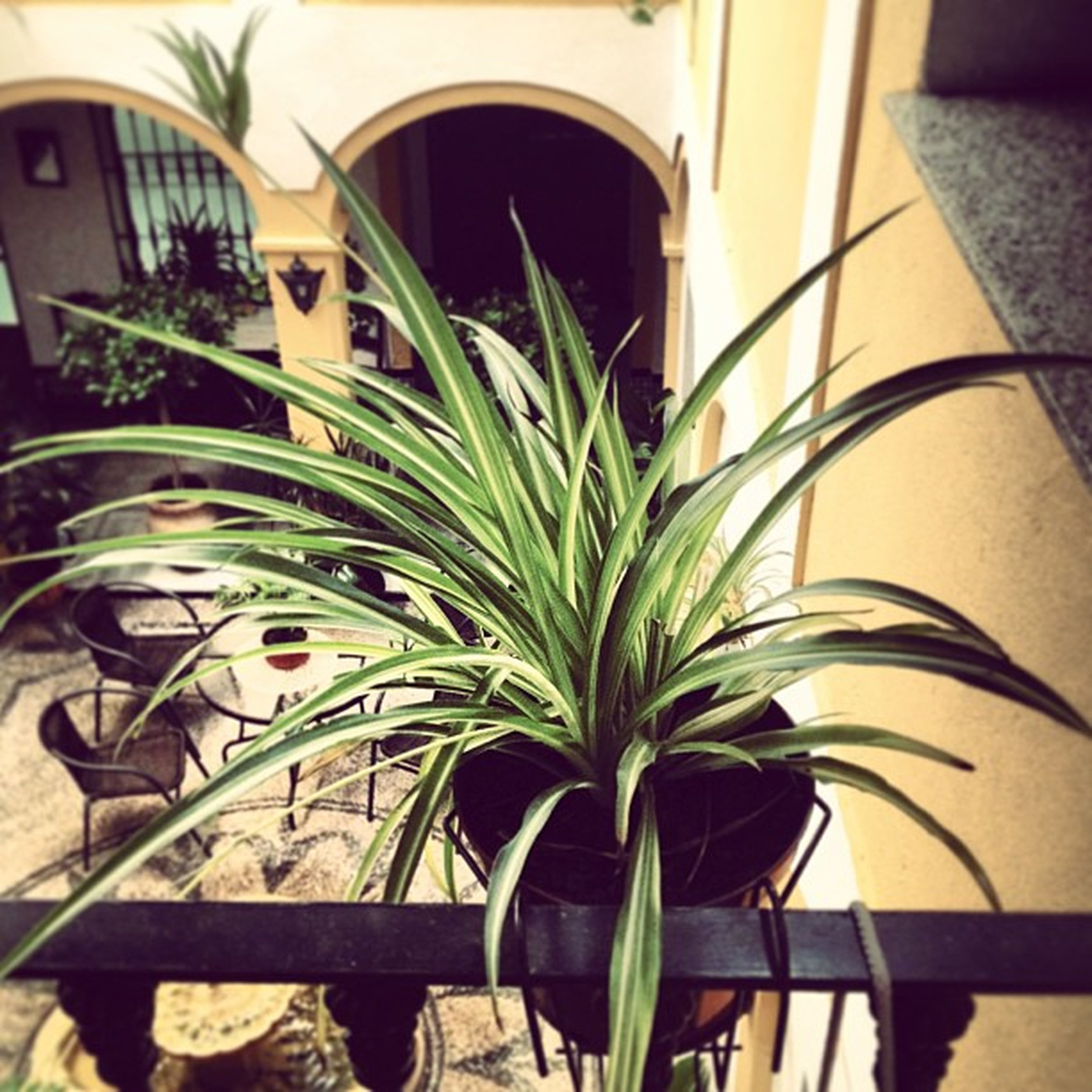 potted plant, plant, built structure, palm tree, growth, architecture, window, building exterior, indoors, chair, sunlight, balcony, house, no people, front or back yard, day, railing, nature, green color