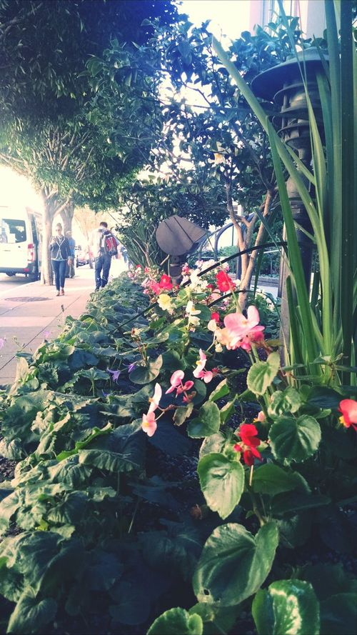 City meets pretty City Streets  Flowers Piece Of Nature San Francisco