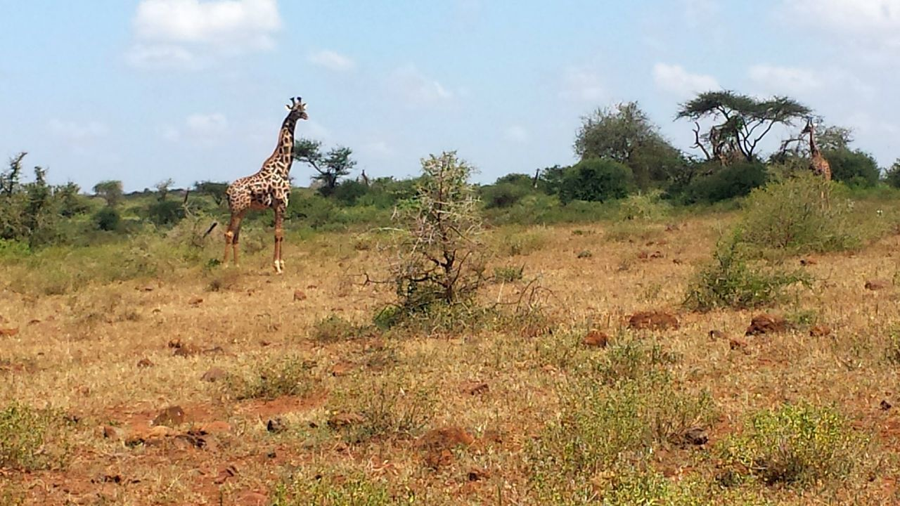 Kenya Nature African Safari Kenya Traveling Nature Animal Wildlife Day Tree Africa Sky