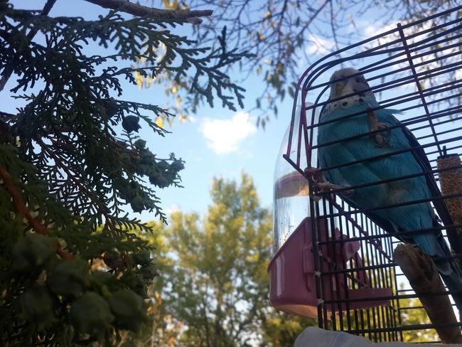 Birds Bird Photography Birds Of EyeEm  Muhabbet Kuşu, Birds, Bird Hacilar Erciyes Yolu Sky, Blue, Tone, Tenor, Aura, Quality Tree