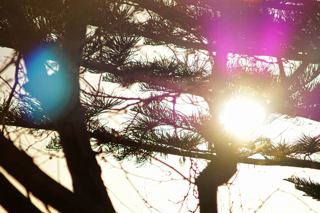 Back Lit Backlit Beauty In Nature Branch Bright Bright Colors Colour Of Life Day Lens Flare Low Angle View Nature Outdoors Scenics Shining Sky Solar Flare Sun Sunbeam Sunlight Sunny Tranquil Scene Tranquility Tree Tree Trunk