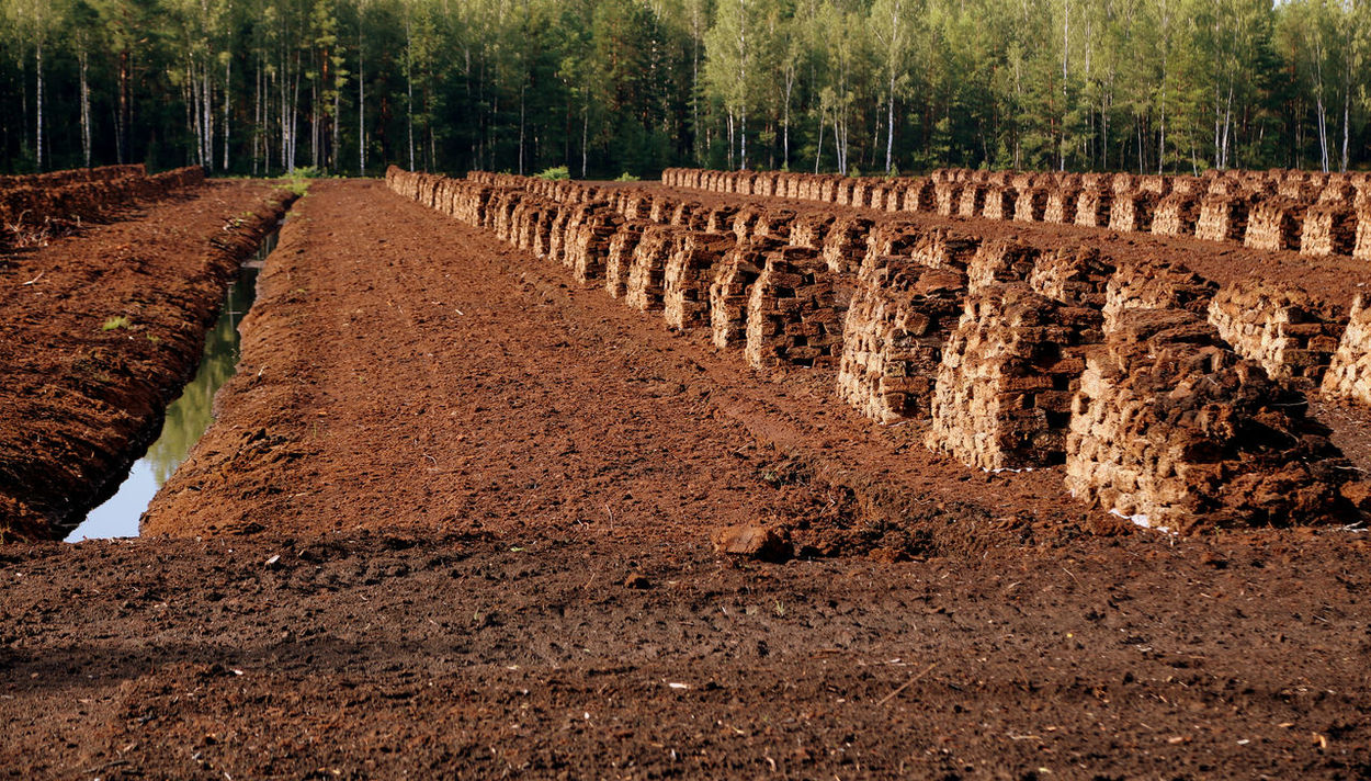 peat is stacked in rows waiting for transport in a forest in Latvia. Travelling The Baltic States Travelling Photography Brennstoff Torfabbau Bog Peat Peat Extraction Renewable Energy Peat Field Agriculture Peat Peat Mining Lagerung Harvesting Peat Peat Bog Heating Period Fossil Fuels Evening Light Fossil Fuel Torfballen Torffeld Travelling Swamp Wald Und Torf Lettland  Torffabrik