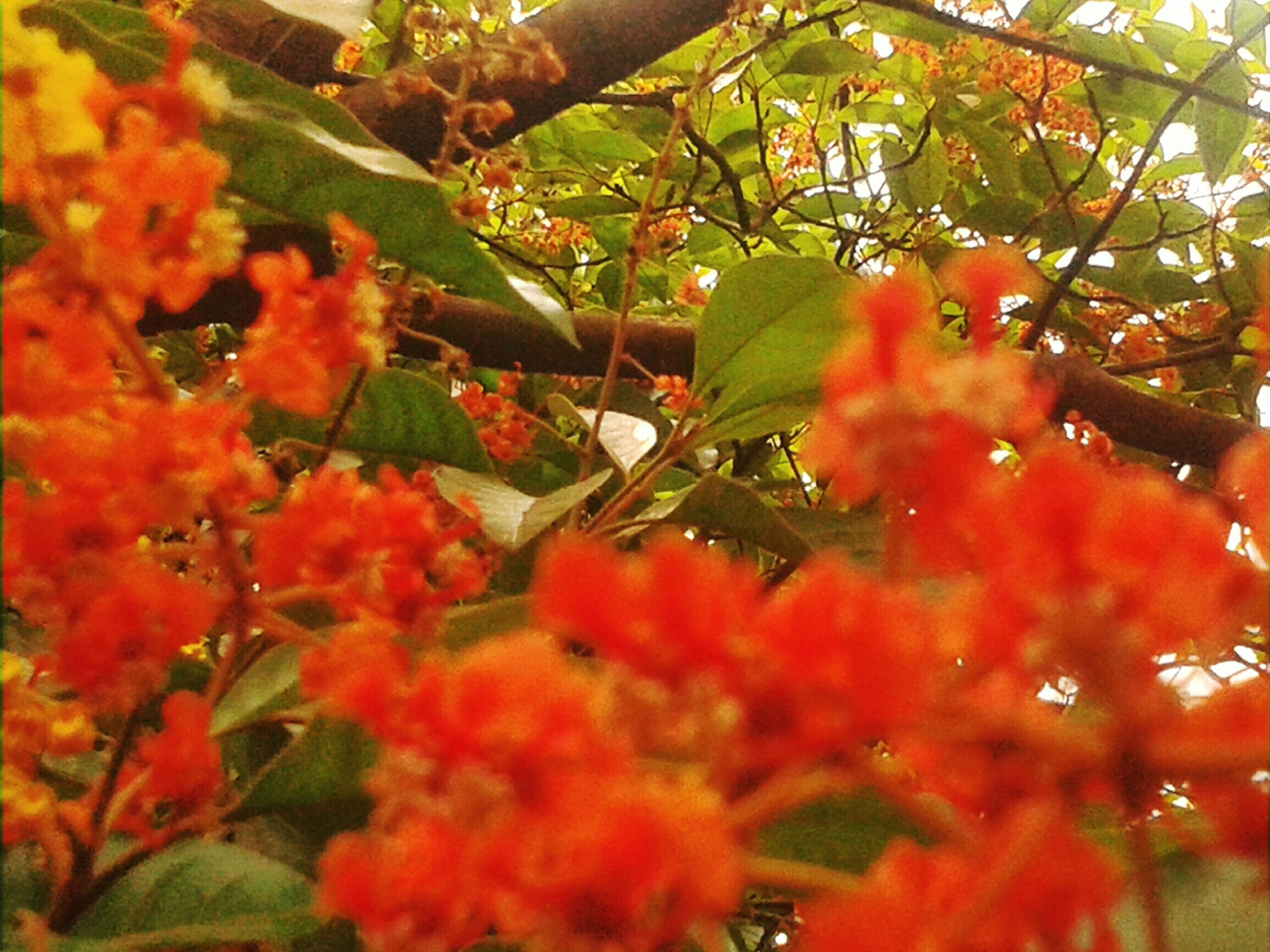 red, tree, growth, autumn, season, leaf, branch, change, freshness, beauty in nature, nature, close-up, focus on foreground, orange color, selective focus, day, fragility, flower, outdoors, low angle view